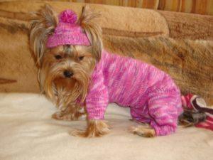 odezhda-dlya-jorkov-svoimi-rukami-poshagovye-rekomendacii-300x225 Одежда для Йорков: шьем и вяжем костюмчики для собак своими руками