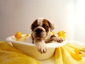 Мыть собаку