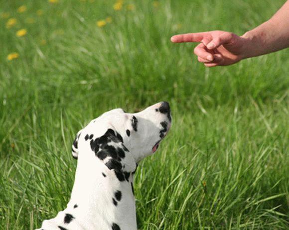 Как научить собаку выполнять команду «Фу!»