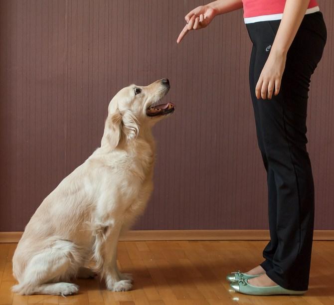 Как научить собаку выполнять команду «Сидеть!»