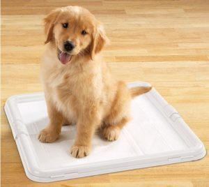 Приучить к пеленке щенка