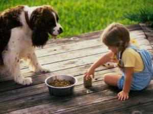 Кормить собаку