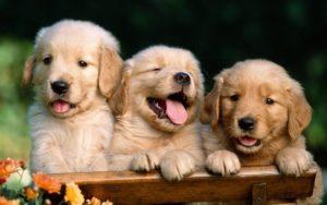 Собаки