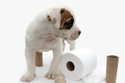 Что делать, если у собаки запор, и как ей помочь