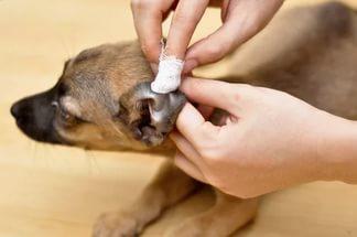 Как и чем можно чистить уши собаке в домашних условиях