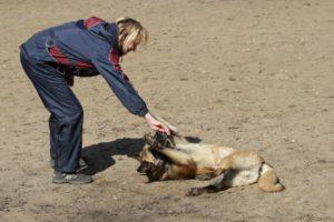 Научить собаку команде «Умри»