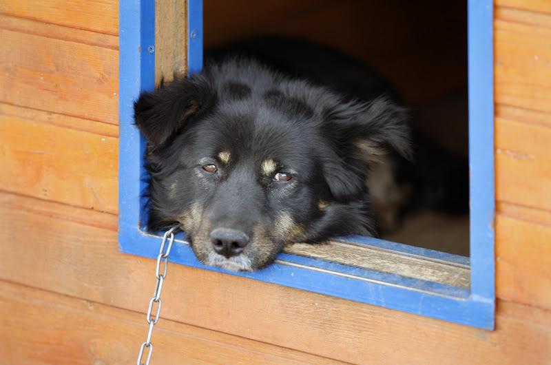 Как можно приучить собаку к будке