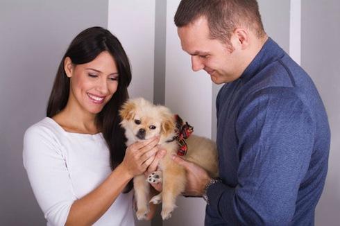 Как правильно выбрать породу собаки для дома и квартиры