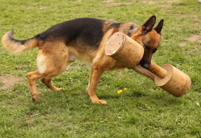 Как самостоятельно научить собаку команде «Апорт»