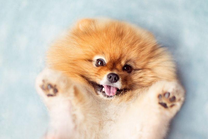 Самые редкие и красивые имена для собак девочек