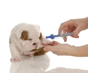 Инфекционный гепатит у собак
