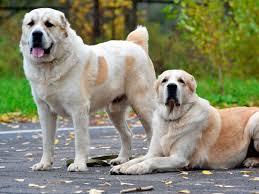 Какие есть самые здоровые породы собак