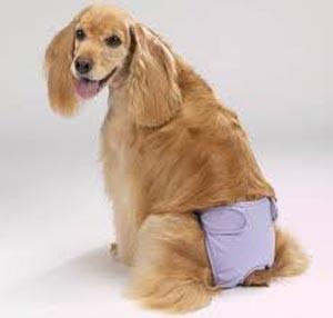 Лечение и профилактика цистита у собак