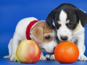 Можно ли собакам давать есть мандарины