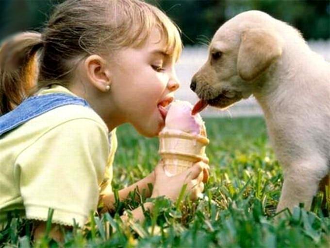 Чем можно заразиться от собаки человеку