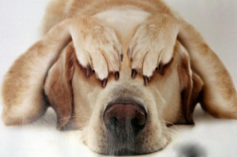 Чего боятся собаки больше всего