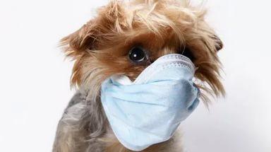 Что делать, если собака кашляет, как будто подавилась, и как лечить