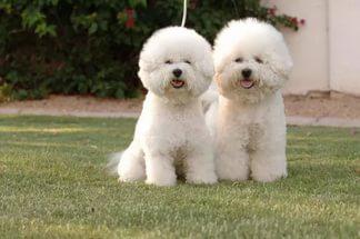 Какие существуют французские породы собак и их описание