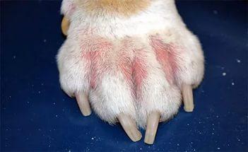 На что бывает аллергия у собак и как именно проявляется