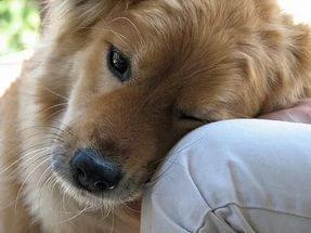 Собака дрожит