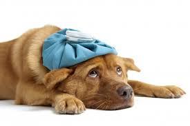 Как правильно понять, что собака заболела