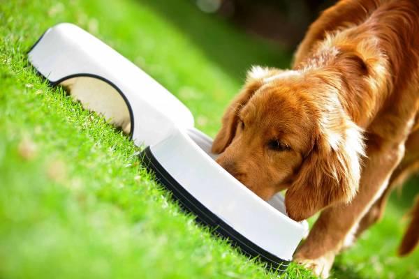 Как и чем кормить собаку в домашних условиях