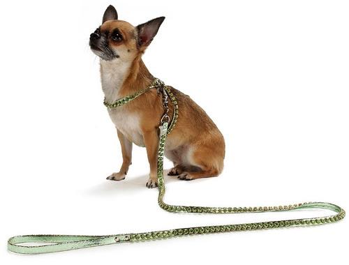 Как быстро приучить свою собаку к поводку и ошейнику