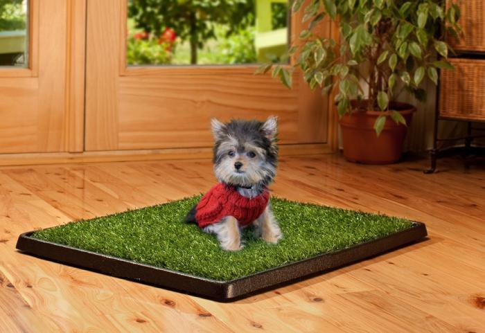 Как в квартире приучить щенка ходить в туалет на лоток или на пеленку