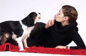 Как можно отучить собаку лаять дома и на всех подряд
