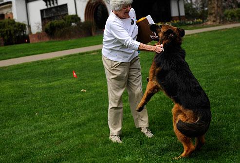 Как можно отучить собаку прыгать на людей при встрече