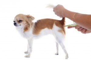 Померить температуру у собаки