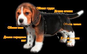 Измерить собаку для одежды
