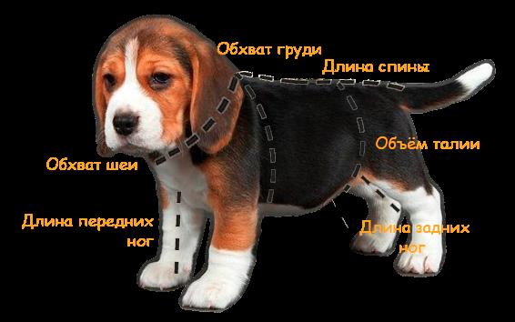 Как правильно измерить собаку для покупки одежды