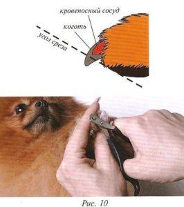 Подстричь когти собаке