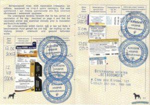 Международный паспорт собаке