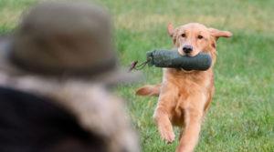 Научить собаку команде «Апорт»