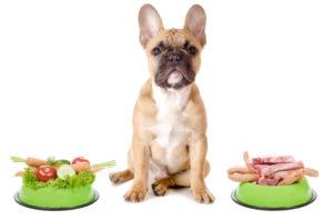 Собака ест корм