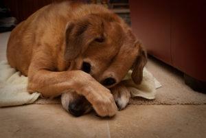 У собаки воняет из пасти что делать