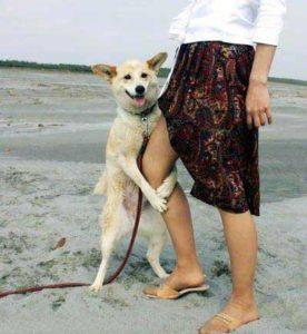 Собака лижет ноги
