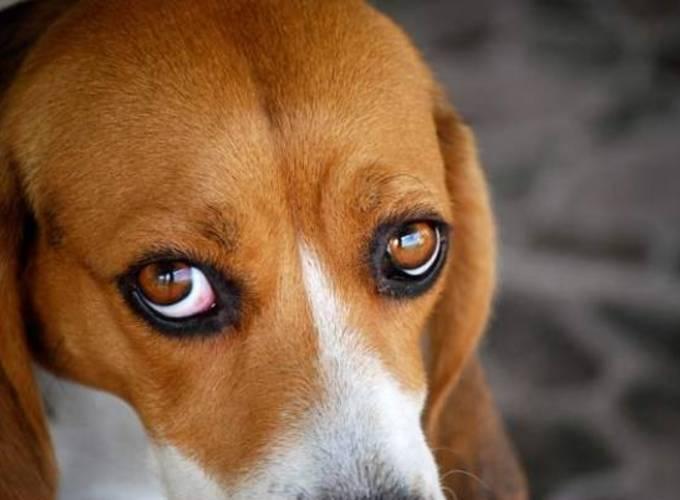 как лечить аллергию глаз народными средствами