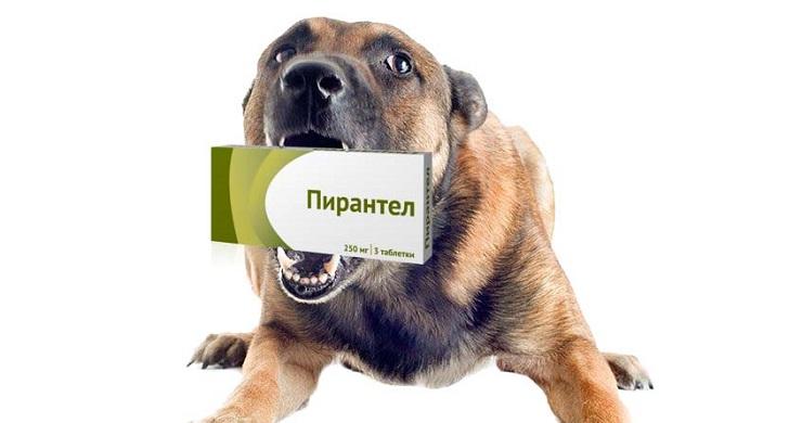 Дозировка и инструкция Пирантела для собак