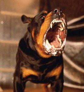 Каковы первые симптомы бешенства у собак