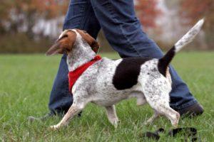 Как можно научить собаку команде «Рядом!» без поводка