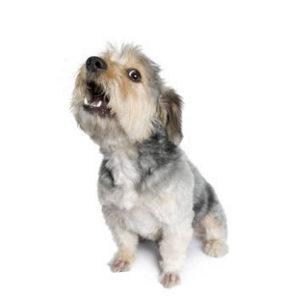 отучить собаку выть и лаять дома
