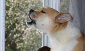 Безопасные методы, которые помогут отучить собаку от беспричинного лая