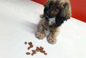 Можно ли собакам давать орехи и какие именно