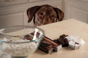 Заменитель шоколада для собаки