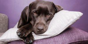 Собаку рвет непереваренной пищей