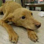 парвовирусного энтерита у собак