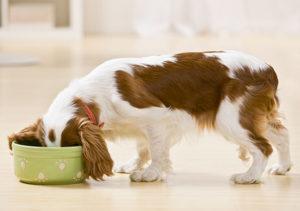 Сколько раз в день нужно кормить собаку и как это делать
